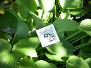 Zentangle in Cala Lily